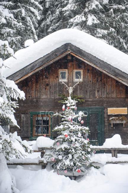 Austria, Altenmarkt-Zauchensee, Albero di Natale in casa di legno nella neve — Foto stock