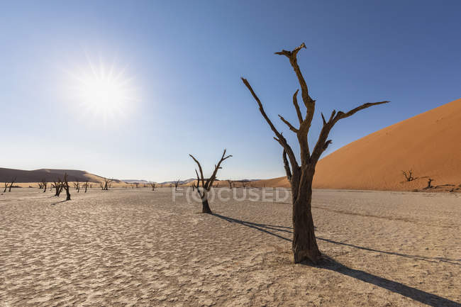 Africa, Namibia, Namib-Naukluft National Park, Deadvlei, dead acacia tree in clay pan — стоковое фото