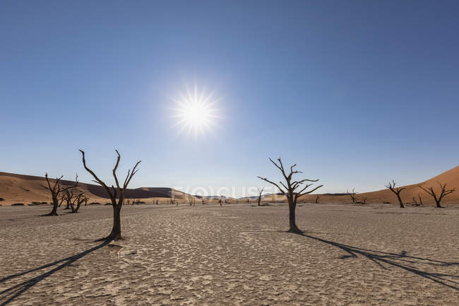 Africa, Namibia, Namib-Naukluft National Park, Deadvlei, dead acacia tree in clay pan — Foto stock