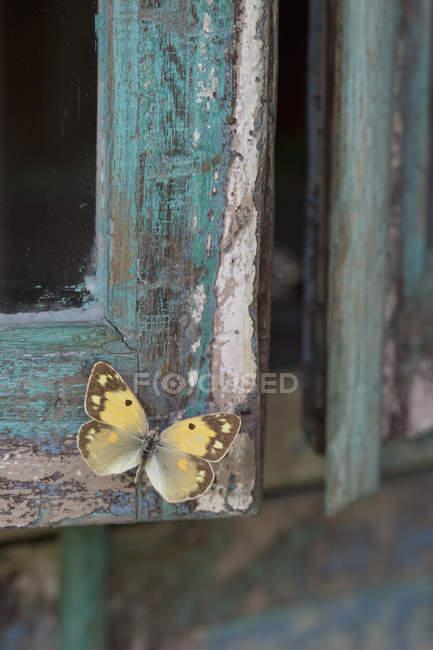 Madeira azul pintada, borboleta amarela — Fotografia de Stock