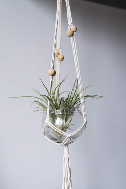 Close up of Air plant in glass — Stock Photo