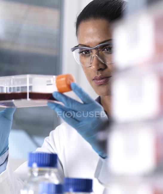Біомедичні дослідження, жінка-науковець спостерігає, як стовбурові клітини розвиваються в культурному глечику під час експерименту в лабораторії. — стокове фото