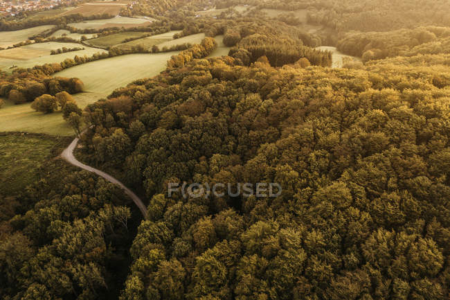 Austria, Lower Austria, Vienna Woods, Biosphere Reserve Vienna Woods, Aerial view of forest in the early morning — Stock Photo