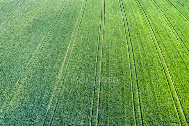 Germany, Baden-Wuerttemberg, Rems-Murr-Kreis, Aerial view of green field — Stock Photo