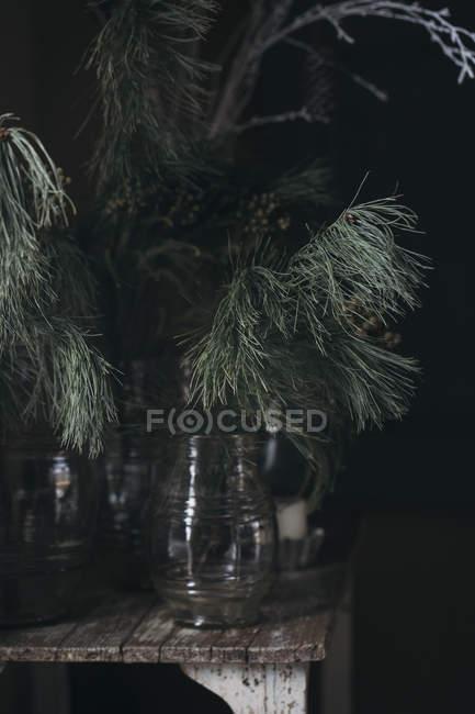 Filial das coníferas nos vidros — Fotografia de Stock