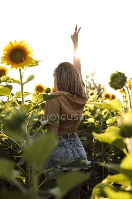 Back view of woman standing in a sunflower field making victory hand sign — Stock Photo