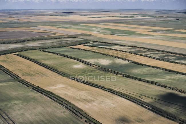 Usa, Campi agricoli con strisce di bellezza degli alberi nel Nebraska occidentale — Foto stock
