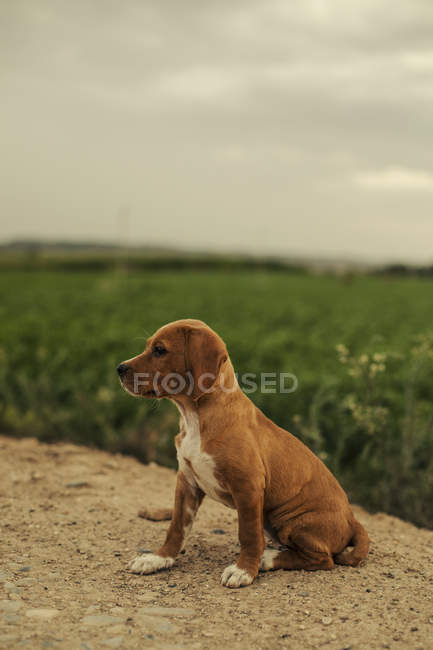 Portrait of a puppy sitting outdoors — Stock Photo