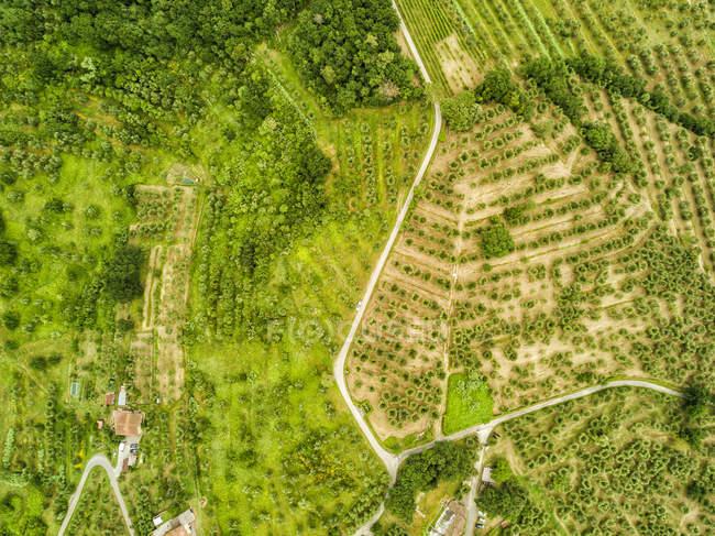 Italia, Toscana, Veduta aerea di Monsummano Terme — Foto stock
