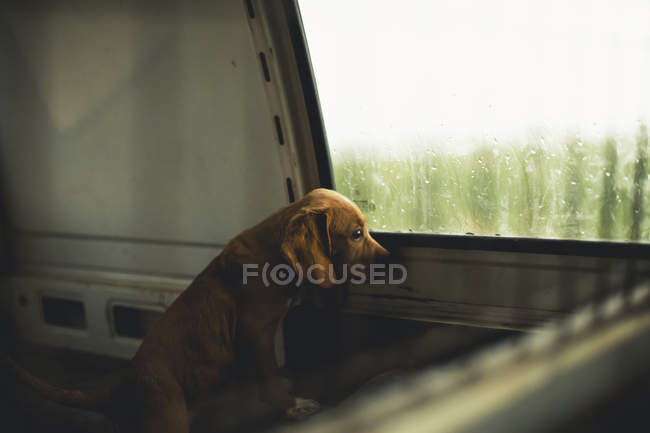 Sad puppy looking out the window of a van — Stock Photo