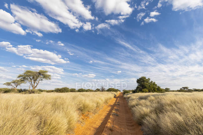 Africa, Botswana, Kgalagadi Transfrontier Park, Mabuasehube Game Reserve, empty sand track - foto de stock