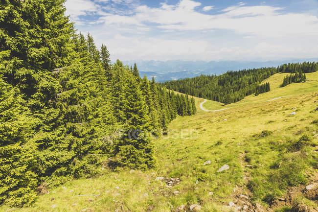 Austria, Estiria, bosque durante el día - foto de stock