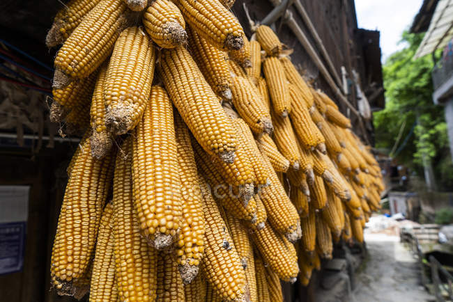 China, Guizhou, corncobs hanging out to dry in a Miao settlement — Stock Photo