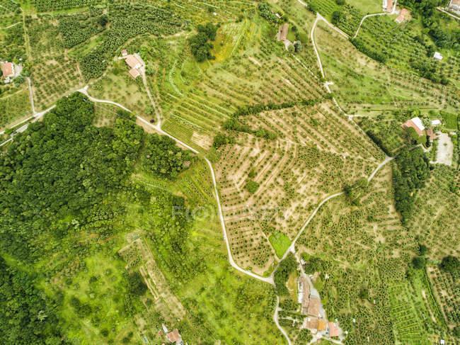 Italy, Tuscany, Aerial view of Monsummano Terme — Stock Photo