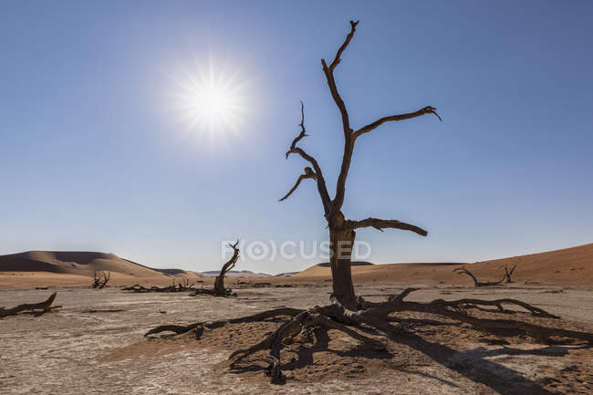 Africa, Namibia, Namib-Naukluft National Park, Deadvlei, dead acacia trees in clay pan — стоковое фото