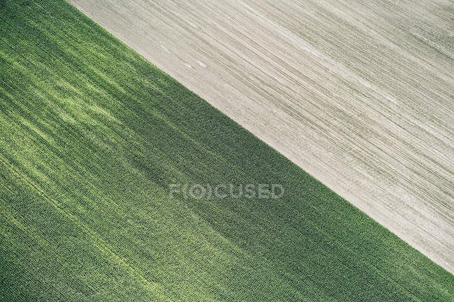USA, Corn field and freshly harvested field in Western Nebraska — Stock Photo