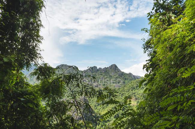 Laos, Vang Vieng, paysage de jungle avec montagne — Photo de stock