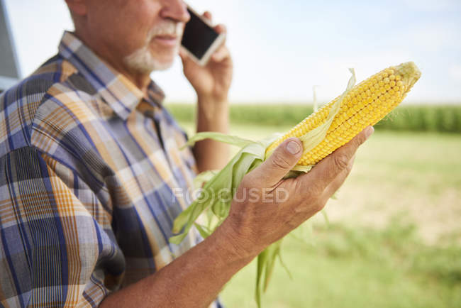 Farmer holding corn cob and talking on cell phone on field — Stock Photo