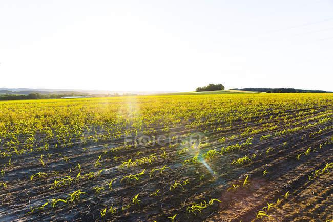 Austria, Innviertel, campo contra el sol - foto de stock