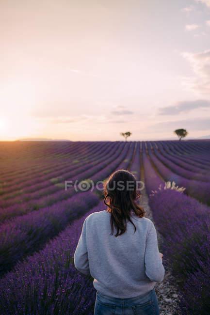Франція (Валенсоле) під час заходу сонця дивилася на жінку, яка стояла на полі з пурпурової лаванди. — стокове фото