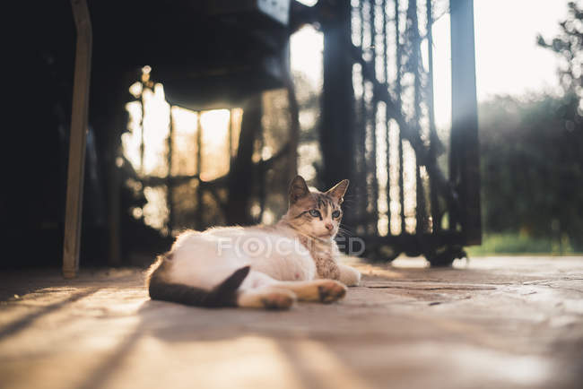 Pregnant cat resting on the ground — Stock Photo