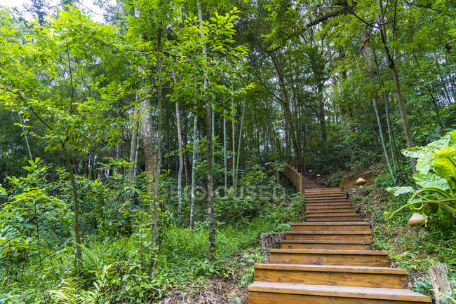 China, Fujian Province, stairs in Niumu forest at daytime — Stock Photo