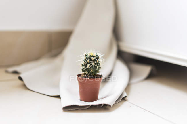 Close up of Small potted cactus — Stock Photo