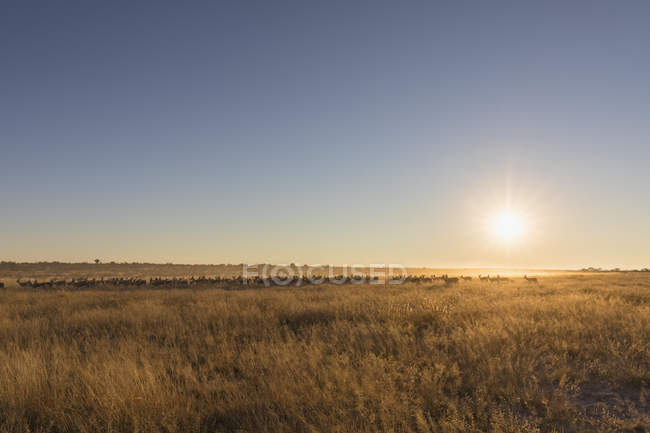 Botswana, Kalahari, Réserve centrale de chasse du Kalahari , — Photo de stock