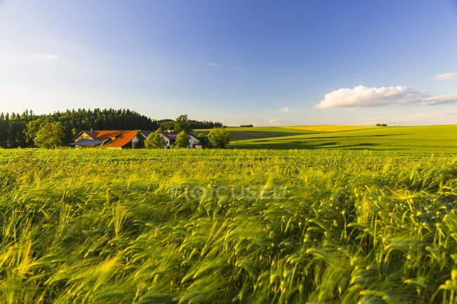 Austria, Innviertel, field at daytime — Stock Photo