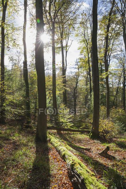Германия,Рейнланд-Пфальц, Пфальц, Природный парк Палатинат Форест осенью — стоковое фото