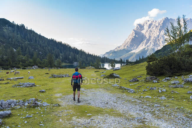 Autriche, Tyrol, Randonneur avec sac à dos, randonnée au lac Seebensee — Photo de stock