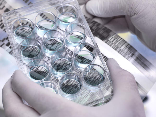 Genetic Research, Scientist holding a multi well plate and DNA gel revealing, the genetic make-up of the specimens — Stock Photo