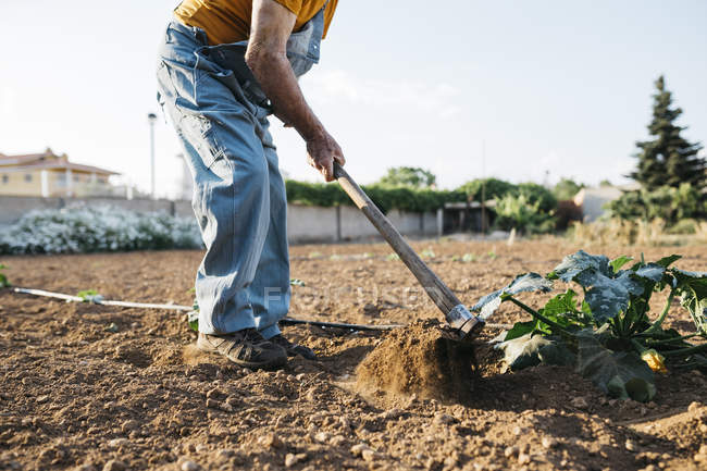 Man in denim overall working on farmland and weeding out soil with hoe — Stock Photo