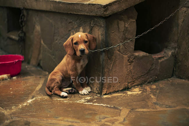 Portrait of a sad puppy tied — Stock Photo