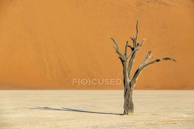 Afrika, Namibia, Namib-Naukluft Nationalpark, Deadvlei, toter Akazienbaum in Tonpfanne — Stockfoto