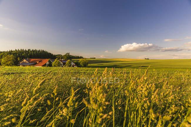 Áustria, Innviertel, campo ao nascer do sol — Fotografia de Stock