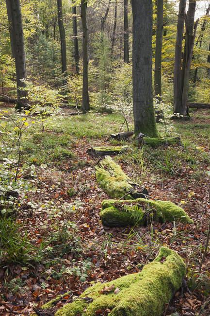 Germany,Rhineland-Palatinate, Pfalz, Palatinate Forest Nature Park in autumn — Stock Photo