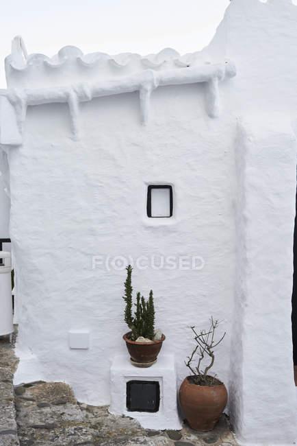 Spagna, Minorca, Binibequer, piante in vaso — Foto stock