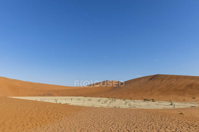 Africa, Namibia, Namib-Naukluft National Park, Deadvlei, dead acacia trees in clay pan — Foto stock