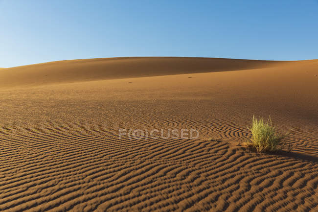 Africa, Namibia, Namib desert, Naukluft National Park, bush growing on sand dunes — стоковое фото
