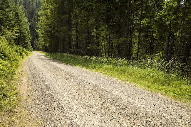 Austria, Estiria, pista forestal vacía - foto de stock