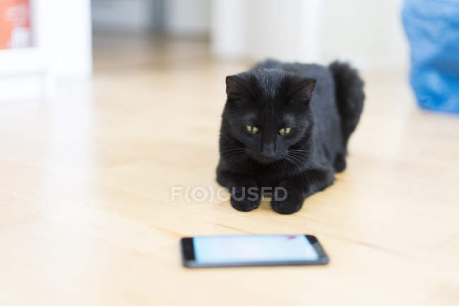 Black cat lying on the floor looking at cell phone — Stock Photo