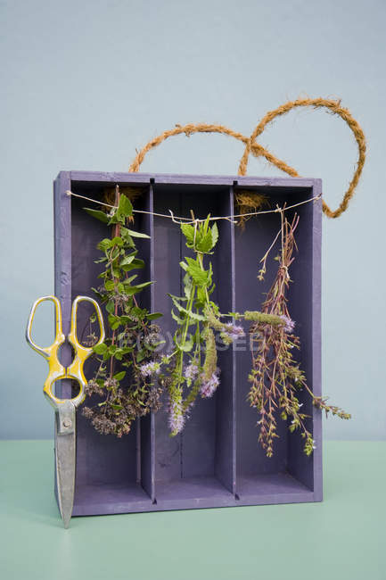 Drying spices in old case of vine, oregano, pepper mint and savory, pruner — Stock Photo