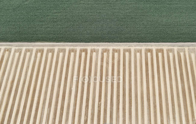 USA, Aerial of a harvested farm field next to a field of corn — Stock Photo