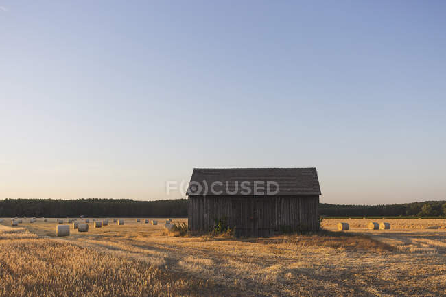 Barn on field at harvest time in evening, hay rolls in field — Stock Photo