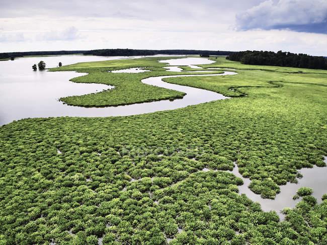 EUA, Virgínia, Marshes do Rio Chickahominy — Fotografia de Stock