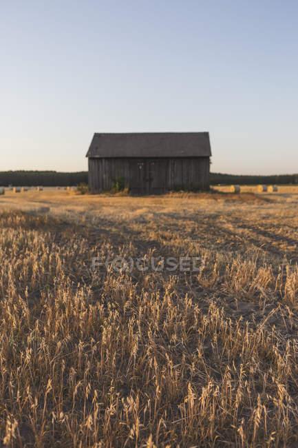 Вертикальное изображение деревянного амбара на поле во время сбора урожая вечером, сено катится в поле — стоковое фото