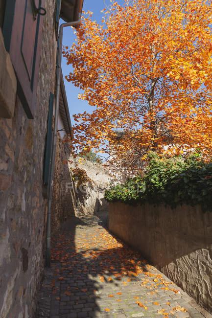 Германия, Рейнланд-Пфальц, Фрейнсхайм, городская стена и пустой путь осенью — стоковое фото