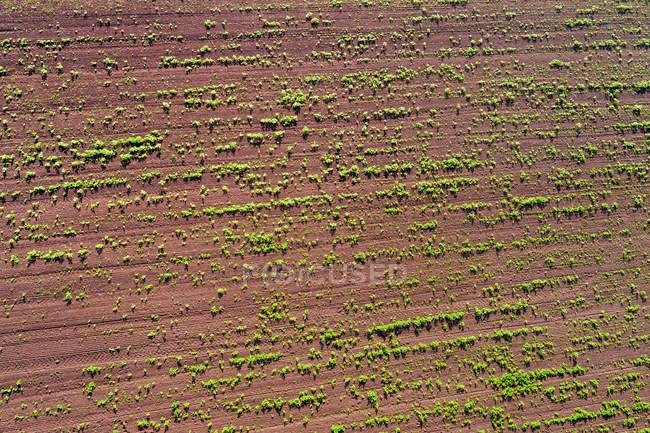 Alemania, Baden-Wuerttemberg, Rems-Murr-Kreis, Vista aérea del campo con plantas - foto de stock