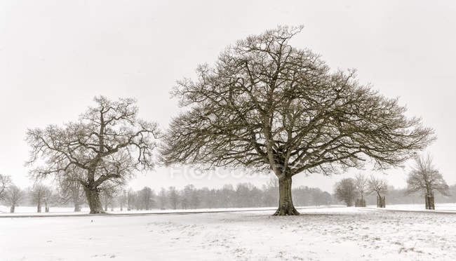 UK, snow-covered winter landscape with bare trees — Stock Photo